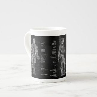 Xícara De Chá Vintage - músculos humanos etiquetados da anatomia