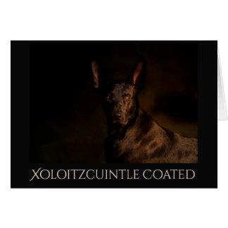 Xoloitzcuintle revestiu o cartão de Geeting