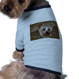Yorkie Camisa Para Cães