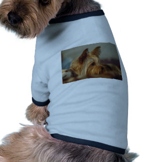 Yorkshire terrier camisas para cães
