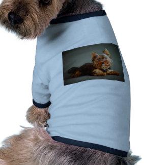 Yorkshire terrier roupas para pet