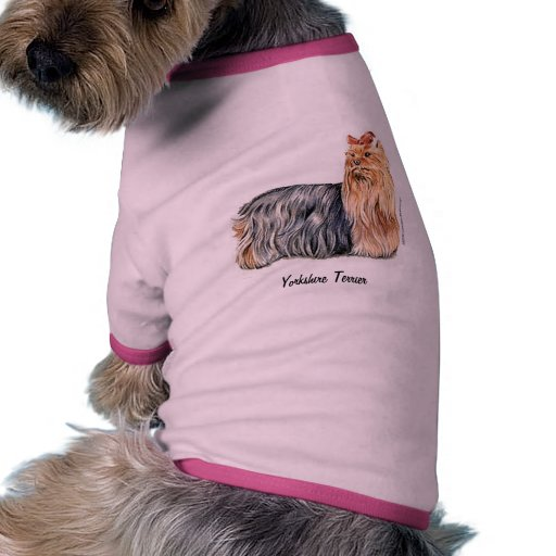 Yorkshire terrier camisas para caes