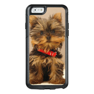 Yorkshire terrier lindo
