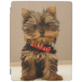 Yorkshire terrier lindo capa smart para iPad