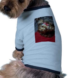 Yorkshire terrier na gaiola da mostra roupa para pet