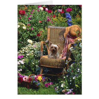 Yorkshire terrier no cartão do jardim