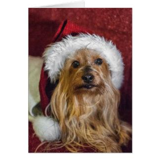 Yorkshire (yorkie)/cartão de Natal Terrier de seda Cartão