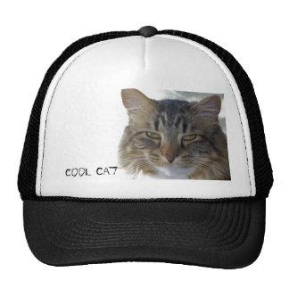 zak, chapéu legal do gato boné