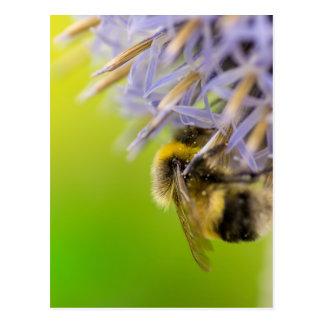 Zangão em uma flor cartão postal