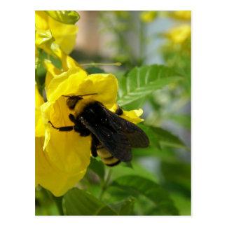 Zangão na flor de Esperanza Cartão Postal
