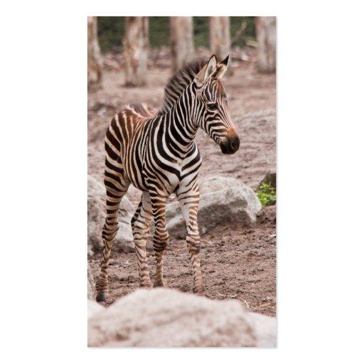 Zebra do bebê cartoes de visita