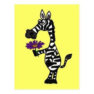 Zebra engraçada CD com cartão da margarida