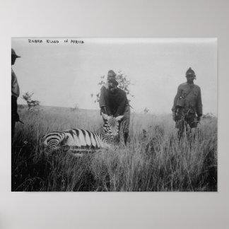 Zebra matada por nativos na fotografia de África Pôster