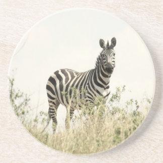 Zebra na natureza porta copos