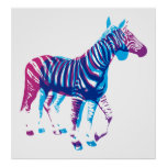 Zebras - azul & roxo pôsteres