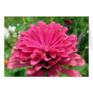 Zinnia cor-de-rosa - cartão de aniversário
