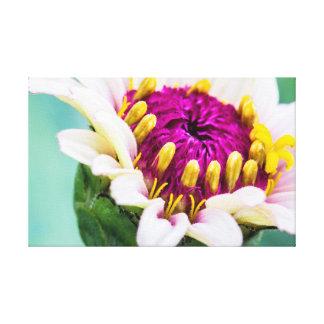 Zinnia em canvas da flor