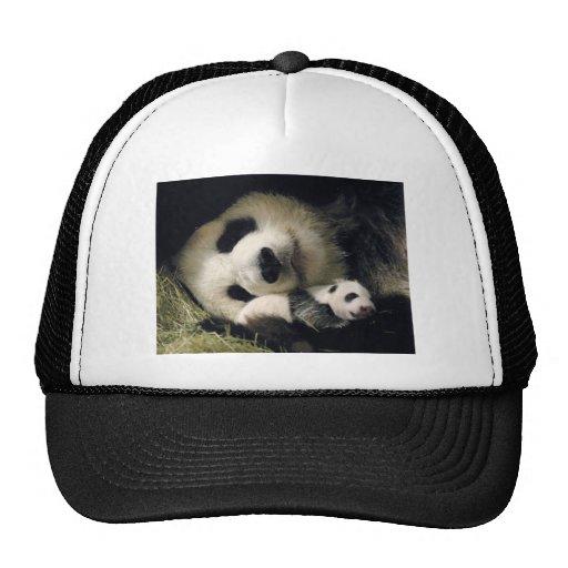 zoo-atlanta_giant_panda_lun-lun_and_cub bones
